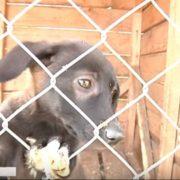 Волонтери просять допомоги для єдиного в Івано-Франківську притулку для тварин (відео)