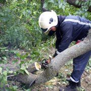 В Івано-Франківську на автостоянку обвалилася гілка дерева