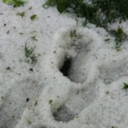 Крим засипало травневим снігом: шокуючі відео
