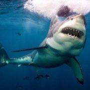 Акула вкусила порноакторку під час фотосесії у морі: відео