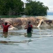 ШОК! Вчені припустили, ким може бути загадкова істота, тіло якої викинуло на берег Індонезії