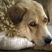 У Франківську невідомі на швидкості викинули із автомобіля собаку