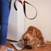 Арешт до 8 років за жорстокість – Рада прийняла закон про ставлення до тварин
