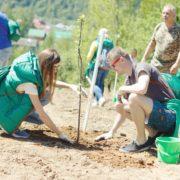 В Карпатах висадили понад 20 тисяч дерев (фото)