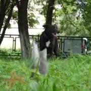 Господарі шоковані: собака в Івано-Франківську вигодував безпритульних кошенят (ВІДЕО)