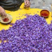 Український фермер заробляє на найдорожчій у світі спеції