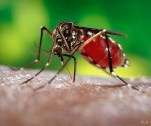 Вчені з'ясували, кого люблять кусати комарі