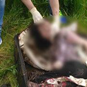 Поліція розповіла деталі вбивства студентки з Болгарії