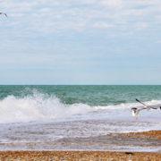 «Ажіотаж» в Криму: пенсіонери, чайки та безхатьки…