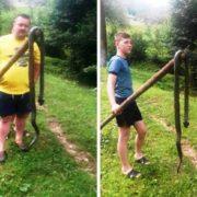 В селі на Закарпатті впіймали величезну змію / ФОТОФАКТ