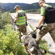 Псевдомінувальника автодорожнього моста затримали на Прикарпатті