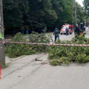 В Івано-Франківську буревій валить дерева. ФОТОФАКТ