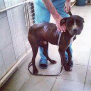 Волонтери врятували від евтаназії собаку, який вкусив людину та загриз трьох псів