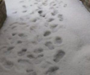 Кара небесна? Суворе літо: Санкт-Петербург засипало снігом(відео)