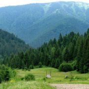 Карпатські ліси можуть внести до списку Всесвітньої спадщини ЮНЕСКО