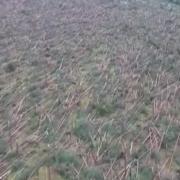 У Польщі буревій знищив десятки гектарів лісу, дерева ламалися як сірники