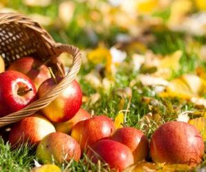 Яблучний спас 2017: що не можна робити в свято