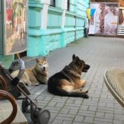 Містяни розшукують власників породистих собак, які другу добу гуляють містом самі. ВІДЕО