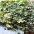 Ходять по городах і збирають мак: правоохоронці викрили зловмисників, які зберігали макові рослини