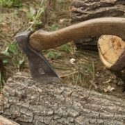 На Прикарпатті зловмисник самовільно вирубав 11 метрів кубічних лісу