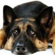 """У Франківську собаку прив'язали до автомобіля і """"вигулювали"""" на ходу. ВІДЕО"""