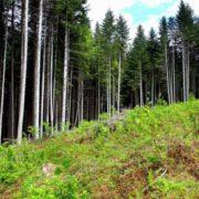 Руслана Лижичко показала масштабні вирубки Карпатських лісів. ВІДЕО