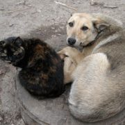 Жителі вулиці Карпатської розповідають про відстріл дворових собак на очах у дітей