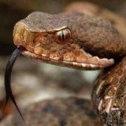 На Прикарпатті 11-річна дівчинка через укус змії потрапила до реанімації