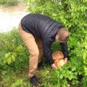 «То просто тачка маленька»: закарпатці у соцмережах жартують про цьогорічний врожай грибів