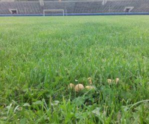 """У Франківську на стадіоні """"Рух"""" ростуть гриби (фото)"""