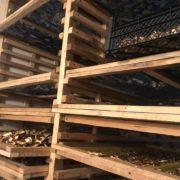 Прикарпатці сушать гриби у мегасушарці. ФОТО