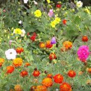 На Франківщині жінка облаштувала на подвір'ї «квітковий рай». ВІДЕО