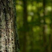Страшна знахідка. Тiло безвicти зниклого чоловіка знайшли в лісі, родичі вважали, що він за кордоном