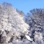 Коли в Україні випаде перший сніг: синоптики дали прогноз