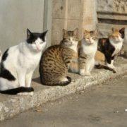 36 котів, собаки, декоративні щури: як бабуся у жахливих умовах внучку виховувала. ВІДЕО