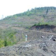 В Карпатах готується масштабна вирубка лісу заради курорту: активісти просять про допомогу
