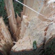 Сильний буревій знищив на Прикарпатті 8 гектарів лісу