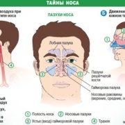Таємниці носа, або чому при нежиті не можна використовувати судинозвужувальні краплі