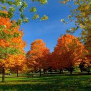 Народні прикмети на 19 жовтня – День Фоми, День Дениса