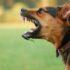 Чому на одних людей собака гавкає, а на інших не лає