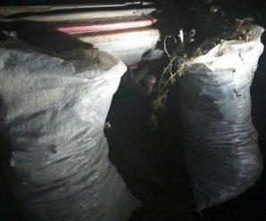 У машині п'яного франківця поліцейські знайшли два мішки наркотиків. ФОТО