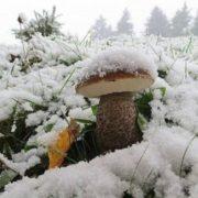 Перший сніг в Україні: опубліковано нові фото
