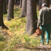 На Прикарпатті у лісі померло троє грибників (відео)