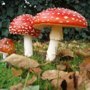 На Прикарпатті від отруєння грибами померла 5-річна дитина