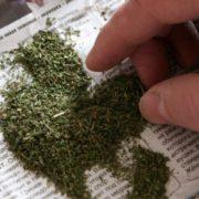 Коломиянина, який розгулював з наркотиками у кишені, викрили правоохоронці
