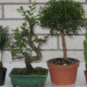 5 кімнатних рослин, які залучать у ваш будинок гроші