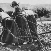 Обожнюю цю фразу: «А раніше жінки в полі наpoджували і нічого! І paку ніякого не було! »