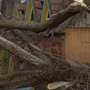 Позривав дахи, повикорчовував дерева: раптовий буревій наробив лиха на Прикарпатті(відео)