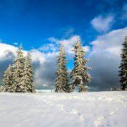 Те чого так бракує на Різдво! Засніжені Карпати: франківець поділився зимовими світлинами гори Хом'як. ФОТО