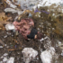 Вбив чоловіка, а тіло викинув на смітник: з'явилися подробиці резонансної справи